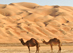 thumb-Camels-in-the-Rub-al-Khali