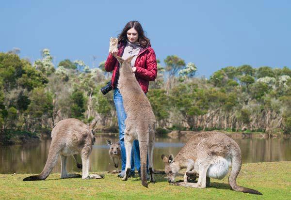 Cheap Flights To Australia Book Air Tickets To Australia